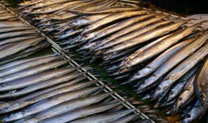 秋刀魚の修正画像1