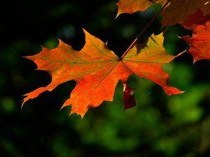 autumn-196566_960_720